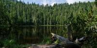 Den eiszeitlichen und bis heute unberührten Wildsee erreicht man nur über einen kleinen Steig. Foto: Joachim Chwaszcza