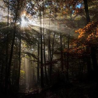 Lichtspiele im Herbstwald, Foto: Daniel Rosengren