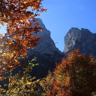 Der Bergwald zeigt sich derzeit, wie hier im Kaisergebirge, von seiner schönsten Seite. Foto: DAV/M. Pröttel