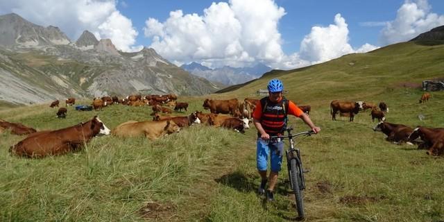 Tag 7: Entspannte Menschen – entspannte Kühe. Kurze Schiebepassage zum Col de la Vallée Étroite.