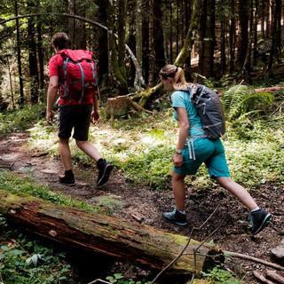 Wandern im Wald und mit Abstand, Foto: DAV/Hans Herbig