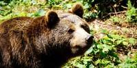 In den beiden Tierfreigehegen des Nationalparks kann man nicht nur Bären beobachten. Foto: Joachim Chwaszcza