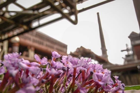Ruhrgebiet-Zeche-Zollverein-Blumen