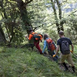 Der Wege zur Arbeitsfläche - Die Helfergruppe gelangt über einen Steig zur Arbeitsfläche.
