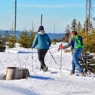 """""""Schachten"""" heißen die baumfreien Waldwiesen, die – ähnlich den Almen der Alpen – als Weideflächen genutzt wurden und teilweise noch genutzt werden. Foto: Joachim Chwaszcza"""