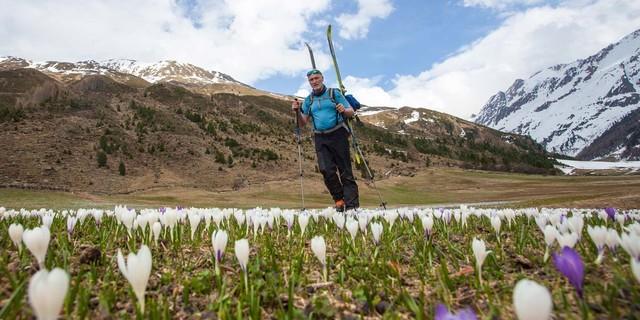 Zurück von der Weißkugel. Die Blumenpracht tröstet beim Skitragen. Foto: Markus Stadler