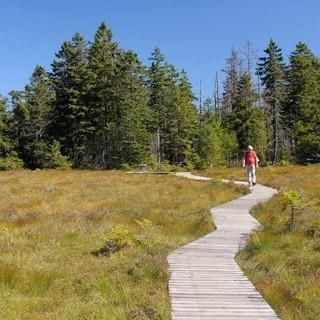 Vorsicht im Moor: Abseits des Holzwegs warten Wiedergänger! Foto: Folkert Lenz
