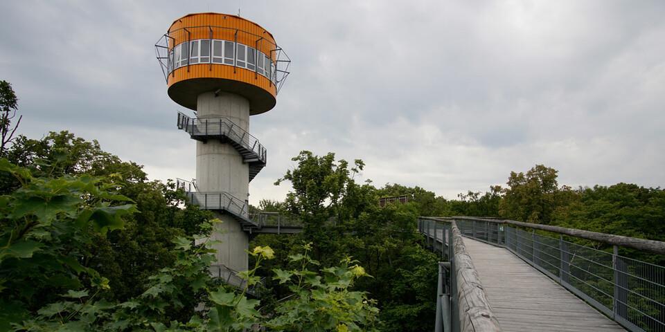 Der Panoramaturm des Baumkronenpfads im Hainich beherbergt auch eine Wetterstation. Foto: Joachim Chwasczca