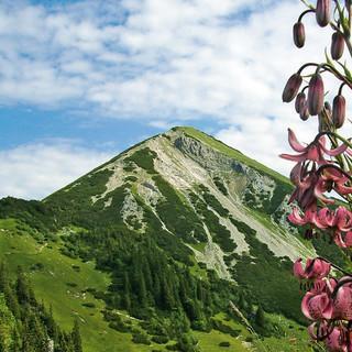 Einst umkämpft, heute Naturschutzgebiet ohne Seilbahn: der Geigelstein in den Chiemgauer Alpen. Foto: Gemeinde Schleching