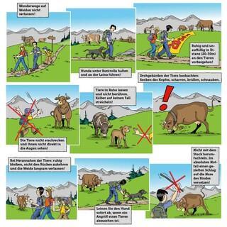 Die Infobroschüre der Landwirtschaftskammer Tirol gibt Tipps zum richtigen Umgang mit Kühen.
