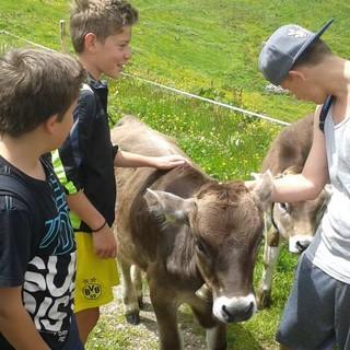 Bergtour mit Kuh, Foto: Jubi/ Ben Miroux