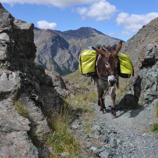 Mit dem Esel durchs Queyras