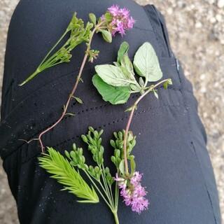 Reiche Beute für eine relativ kurze Wanderung. Wichtig ist, dass Pflanzen nicht vollständig abgeerntet, sondern immer nur einzelne Blätter, Blüten oder Knospen gesammelt werden. Foto: Angela Kreß