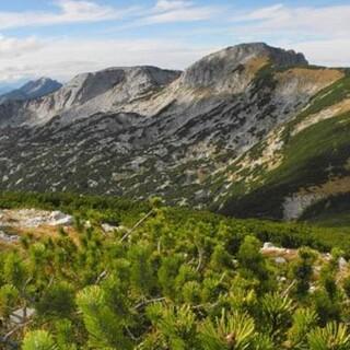 Sengsengebirge - Das Sengsengebirge von Süden – die Kalkgipfel erheben sich aus einem dichten Latschengürtel. Foto: NPK/Erich Weigand