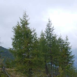 Abstieg zur Casera Tragonia - <p>Im Abstieg zur Casera Tragonia – wo früher über 200 Kühe die Wiesen frei hielten, wächst heute die ehemalige Almfläche zu.</p>