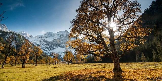 Vor allem im Herbst ist der Ahornboden einen eigenen Besuch wert. Foto: Heinz Zak