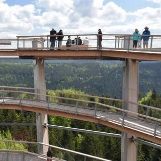 Schwarzwald Panorama-Radweg - Vom Baumwipfelfad aus sieht man vor lauter Bäumen fast nur noch Wald. Foto: Thorsten Brönner