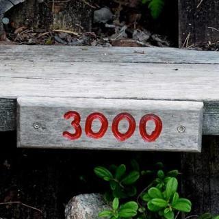 Motivierend oder entmutigend? Jede 500ste Sprosse ist nummeriert. Foto: Antes & Antes