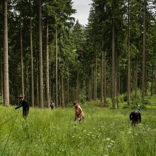Wald Schutzwald DAVArvid Uhlig