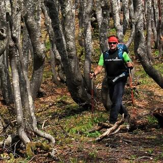 Stangenwald statt Aussicht zu Beginn der Etappe von Baške Oštarje nach Alan. Foto: Silvia Schmid