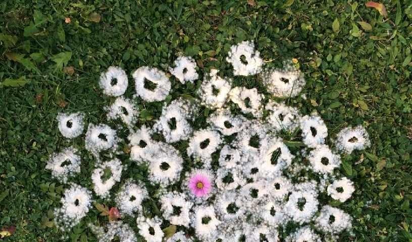 Blumenlandart aus japanischen Herbstanemonen und einer Cosmea-Blüte - Polina Heetel