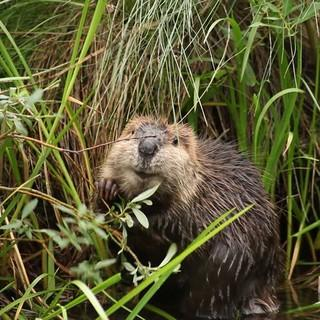 "Aus dem Film ""The Beaver Believers"", Foto: Sarah Koenigsberg"