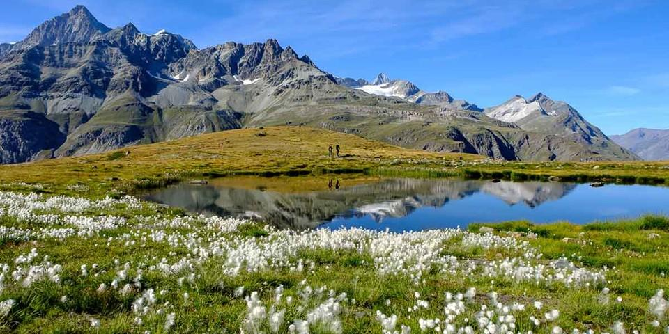 Wollgras-Teppich auf dem Glaciertrail. Foto: Iris Kürschner/powerpress