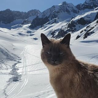 Follow me @muina_the_hut_cat, Foto: Team Neue Regensburger Hütte