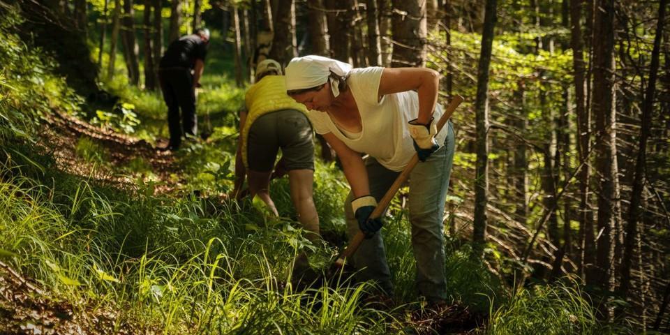 Aktion Schutzwald - Bei der Aktion Schutzwald der Natur etwas zurückgeben, Foto: DAV/Arvid Uhlig