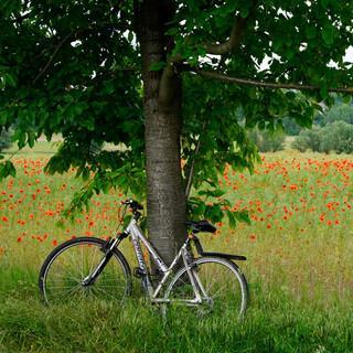 Gut ausgeschildert kann man am Saale-Unstrut-Radweg entspannt biken. Foto: Joachim Chwasczca