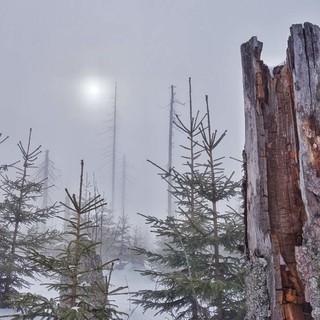 Winter-im-Bayerischen-Wald-Joachim-Chwaszcza-(14)