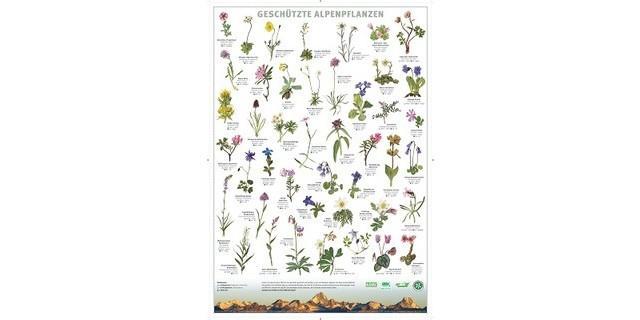 """Plakat """"Geschützte Alpenpflanzen"""""""