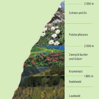 Vegetation der Höhenstufen, Quelle: Alpenblumen entdecken & bestimmen