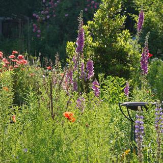 Naturnaher Garten. Foto: Thomas Staab / LBV-Bildarchiv