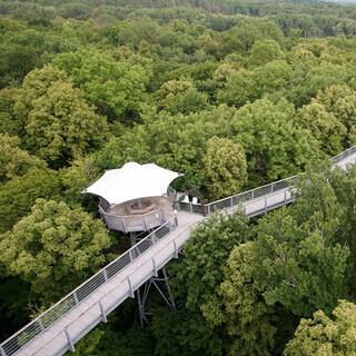 Der Baumkronenpfad im Hainich Nationalpark ist als Rundweg angelegt. Foto: Joachim Chwasczca