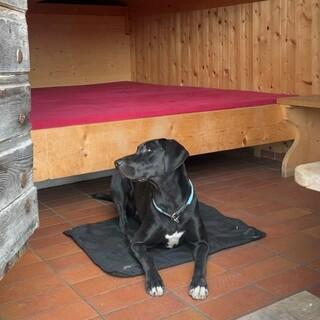Hunde willkommen, aber nicht im Bett, Foto: Charlott Hasslinger