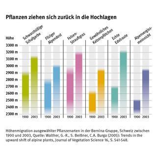 Ausstellung-Klimawandel-Klimaschutz-Grafik-Pflanzen-Hochlagen