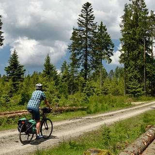 Schwarzwald Panorama-Radweg - Forstarbeit gehört zur Waldpflege – und sichert Radlern gute Aussicht. Foto: Thorsten Brönner