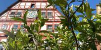 Kennst du das Land, wo die Zitronen blühen: Südliches Flair in Besigheim. Foto: Joachim Chwasczca
