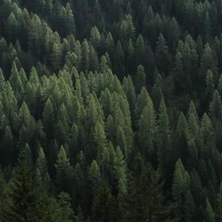 Wald mit Licht und Schatten