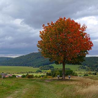 Herbstimpression vom thüringischen Werra-Burgen-Steig. Foto: Klaus Gräbe
