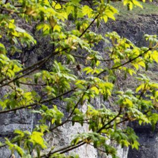 Bärenschlucht - Kletterkonzepte regeln das Miteinander. Foto: DAV/Reich