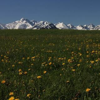 Allgäuer Alpen Frühling Panorama Rubi (26)