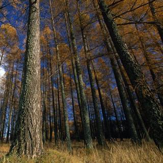 Waldstück, Foto: Wolfgang Ehn