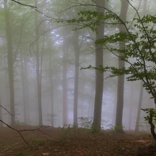 Nach sonnigen Wandertagen kann auch Nebel im Wald die Stimmung nicht mehr trüben. Foto: Ingo Röger