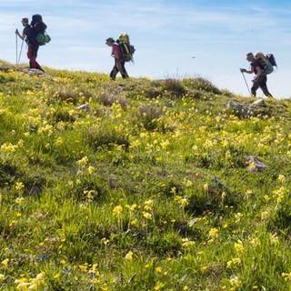 Wiesen voller Primeln wecken Frühlingsgefühle am Colle San Bartolomeo. Foto: Ingo Röger