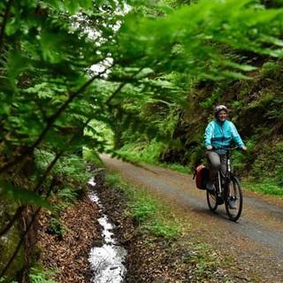 Mit dem Rad durch den Bayerischen Wald - Kleine Schönheiten säumen den Wegrand und belohnen für teils mühsame Strecken. Foto: Thorsten Brönner
